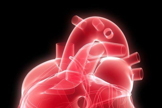 Böbrek ve kalp sağlığı ilişkisi