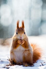 Kış aylarında nasıl beslenmeliyiz?