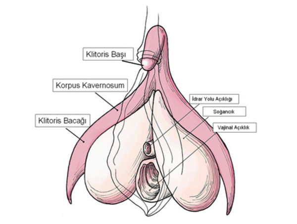Cinselliğin merkezi: Klitoris nerededir?