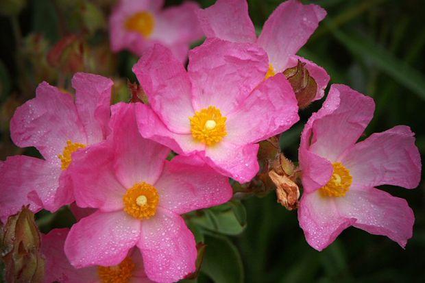 Çiçeklerle sınav stresini azaltın!