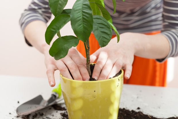 Evde bitki yetiştirmek için bilmeniz gereken 10 madde!