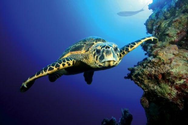 Rüyada kaplumbağa görmek…