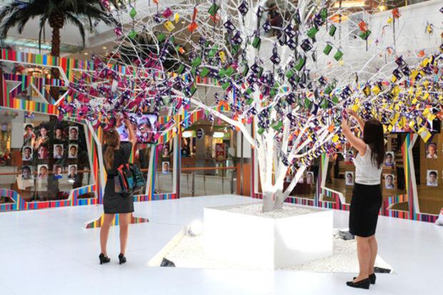 Capitol dilek ağacı bu yıl Nevşehir için yeşeriyor!