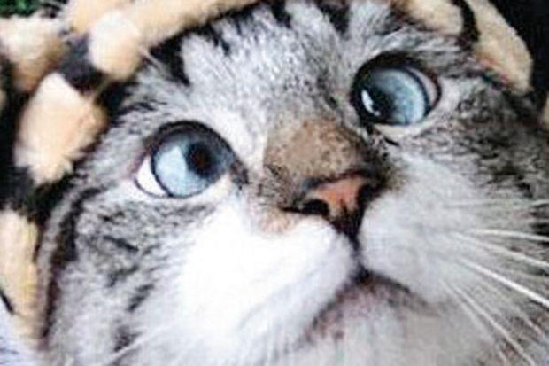 Şaşı kediye 5 bin takipçi!