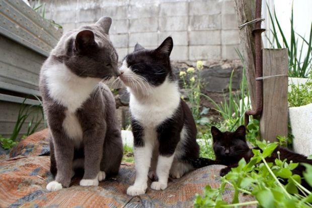 Gerçek bir kedi cenneti: Fukuoka Adası...