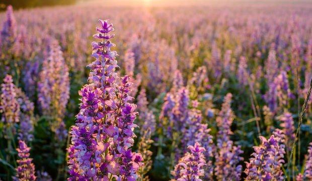 Ruhunuzu rahatlatacak 9 öneri!