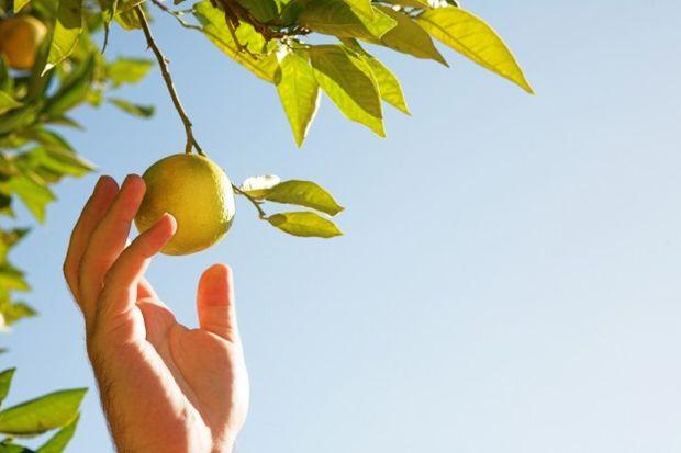 Ellerinizdeki lekeleri limonla temizleyin