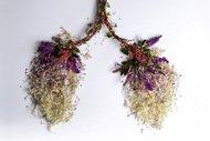 Çiçekler organ açtı…