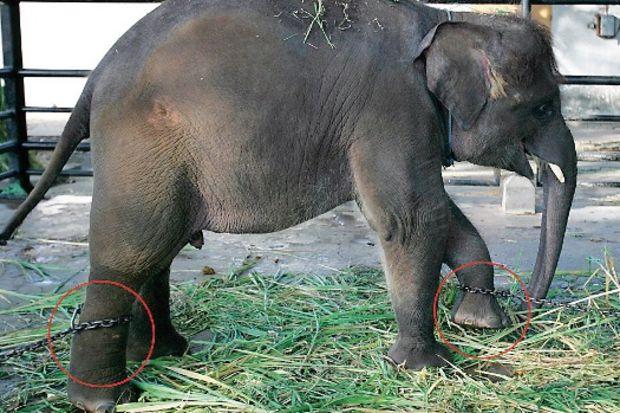 Dünyanın en kötü hayvanat bahçesi