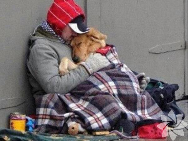 1. İnsanların acılarını hissederler. Yapılan çalışmalar, köpeklerin herhangi bir sıkıntısı olan insanlara  daha çok yaklaştığını gösteriyor. Bu köpeklerin, acı çeken insanlara  yardım etmek istedikleri, onlarla empati kurdukları anlamına geliyor.