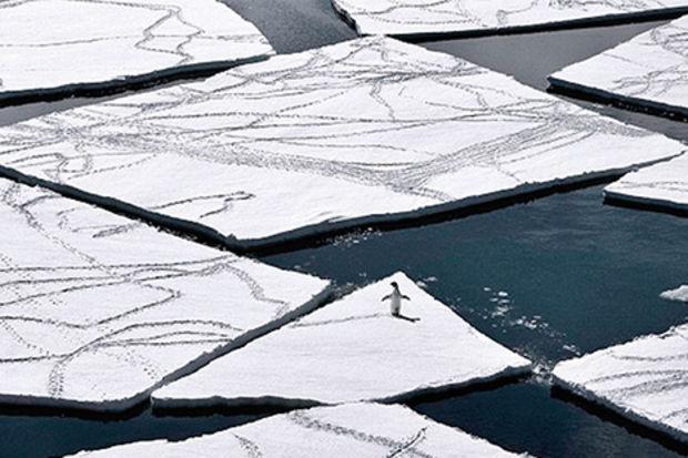 Temiz kalan son okyanus: Ross Denizi
