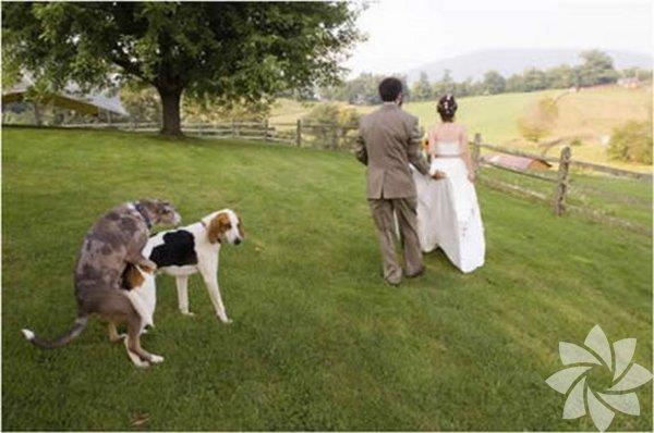 En garip düğün fotoğrafları...