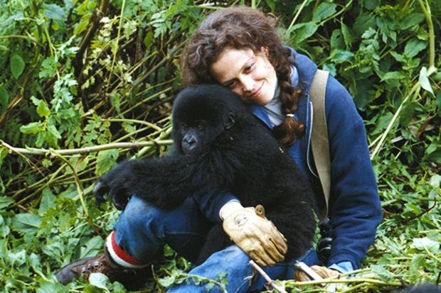 Google'ın Dian Fossey jesti...