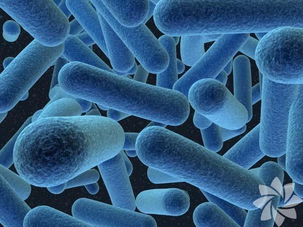Mikrobiyomi Mikrobiyom diye adlandırdığımız, midemizde yaşayan milyarlarca  bakterinin aslında sağlığımızın en önemli parçaları olduğunu henüz yeni  yeni çözmeye başladık. Ancak, hala daha sindirim sistemi veya  metabolizmanın diğer sitemlerle nasıl olup da etkileşime geçtiği  bilinmiyor. Bilmemiz gereken herkesin kişisel bakterilere sahip olduğu  ve dolayısıyla, kişiye özel diyet seçeneklerinin oluşturulması  gerektiği. Doğal ürünlerle beslenmek yine herkes için en çıkar yol  olarak görünüyor.