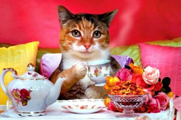 Bu kafe kedilere özel...