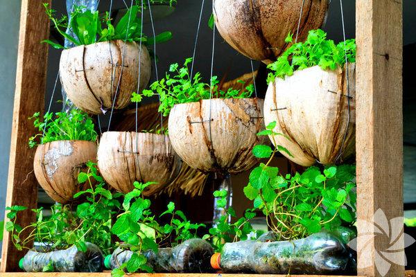 Balkonda ve bahçede sebze yetiştirmek, özellikle havalar ısındıkça çok cazip geliyor. Kim bahçesinde dolaşırken yapacağı yemek için taptaze sebzeleri dalından koparmak istemez ki...  Ancak bunu yaparken sebzenizi yetiştireceğiniz bitkinin kabının büyüklüğüne dikkat etmeniz gerekiyor. Örneğin; marul, ıspanak ve birçok otlar için geniş kaplar gerekmezken, etli domates ve biber gibi sebzeler için daha geniş kaplar kullanılmalı.  İşte size bahçenizde veya balkonunuzda yetiştirebileceğiniz sebzeler ve meyveler...