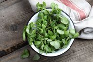 Kilo verdiren sebze semizotunun faydaları