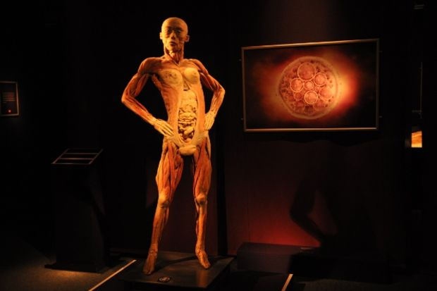 """""""The Human Body"""" sergisi"""