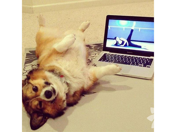 Yoga yapan sevimli hayvanlar