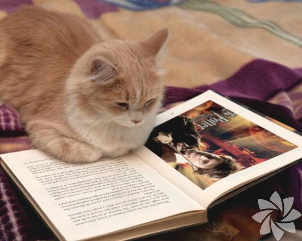 Hot Essays The Black Cat Essay