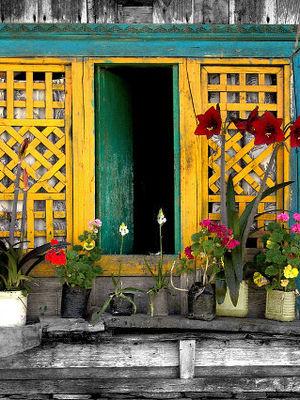 Pencere önü çiçekleri