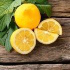 Ter kokusuna kesin çözüm limon!