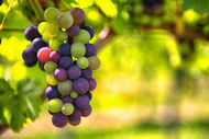 Doğal antioksidan üzümün faydaları