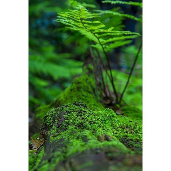 Likenler, mantarlarla su yosunlarının ortak yaşamasıyla ortaya çıkan bitkiler.
