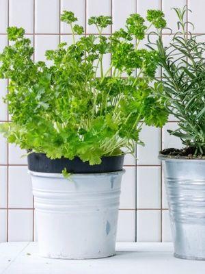 Kilo verirken yemeniz gereken 5 yeşillik