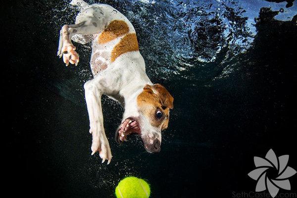 Fotoğrafçı Seth Casteel'ın çektiği suda top yakalamaya çalışan köpeklerin fotoğrafları internette çokca paylaşıldı.