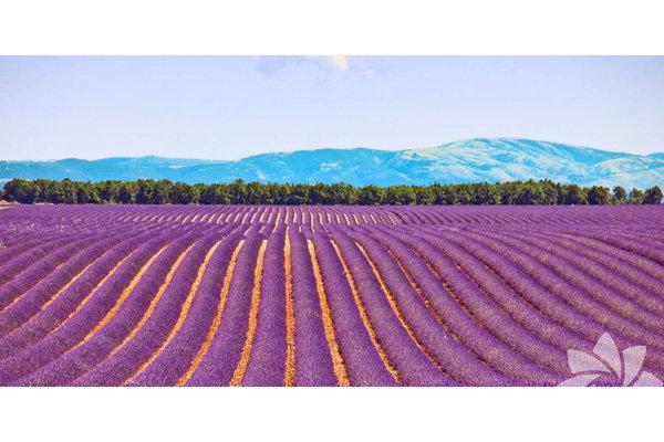 <p>Provence, Fransa</p>