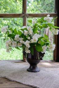 Evinize şans getiren çiçekler