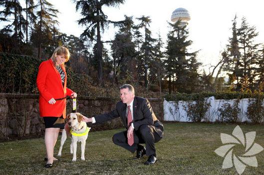 Türkiye'de rehber köpekler yetiştirecek!