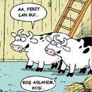 Kurban Bayramı karikatürleri...