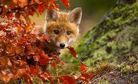 Sonbaharın gelmesine sevinen hayvanlar...