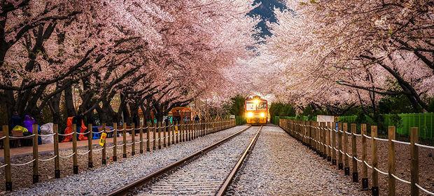 Dünyanın en güzel 20 ağaç tüneli...