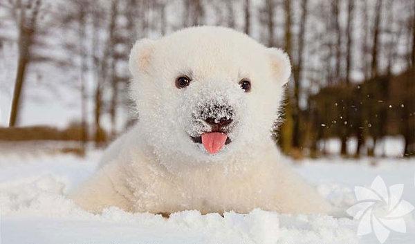 Kar yağmasına sevinen hayvanlar...