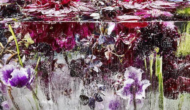 Suda dondurulmuş çiçekler