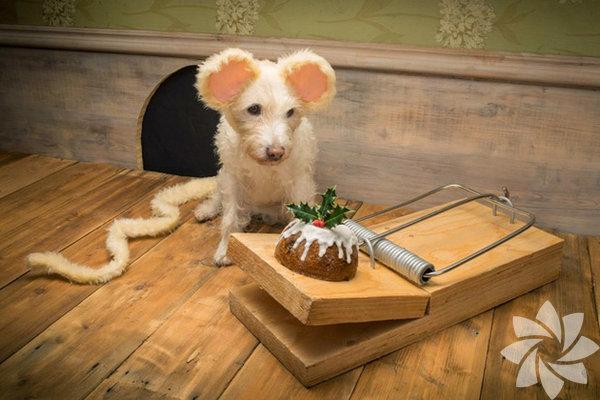 Peter Thorpe'nin bu sevimli köpekleri yılbaşı kartlarının yıldızı...