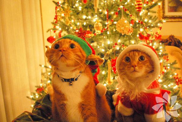 Bu sevimli iki kedi kim bilir nereye bakıyor...