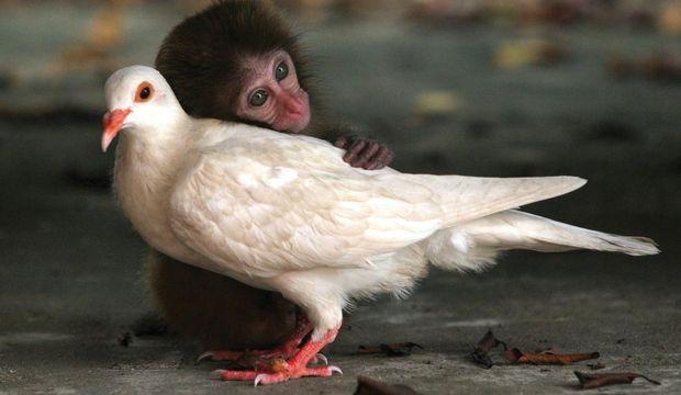 Komik maymunlar...