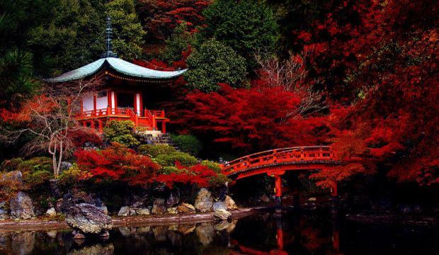 Rengarenk Kyoto...