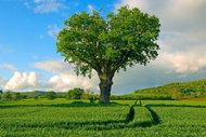 Bu ağaçlar aşık...