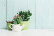 Evinizin havasını temizleyen 9 bitki