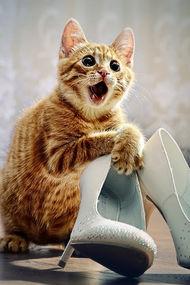 Topuklu ayakkabı giymemek için 9 sebep