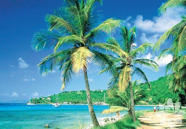 Peki ünlü isimlerin gözlerden ırak gözde mekânları nereleri? İşte bunlardan bazıları...  MUSTIQUE ADASI Karayip Adaları'nın en küçük ve en sakinlerinden biri olan Mustique, doğal plajları ve sualtı zenginlikleriyle başta İngiliz Kraliyet çifti Cambridge Dükü William ve eşi Catherine'in gözdesi.