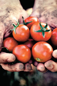 10 soruda organik tarım