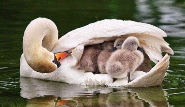 Dünyanın en sevimli aileleri