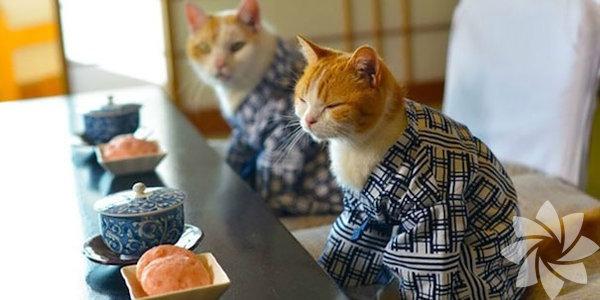 Kimono, genellikle sadece özel günlerde giyilen geleneksel Japon elbiseleridir.