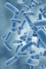 Mikrobiyota nedir?